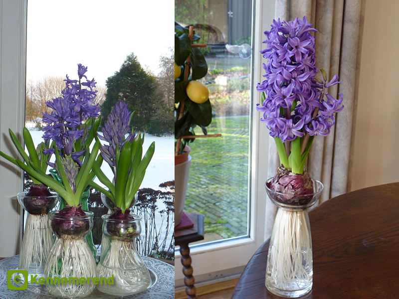 Hyacinth Vases The Process
