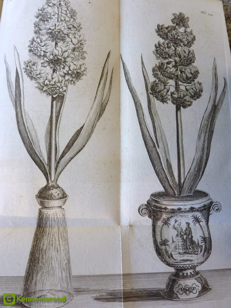 Hyacinth vases history of glasses the famous haarlem hyacinth grower voorhelm published an early picture of a nice double hyacinth forced on a glass vase in his trait sur la jacinthe reviewsmspy
